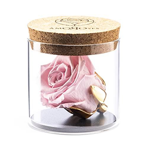 Amoroses Bijou – Rosa estabilizada de eterna con copa chapada en oro de 24 quilates en tarro de cristal | Idea de regalo (rosa rosa)