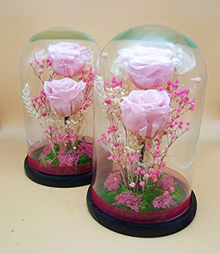 Rosas preservadas Rosas Rosa Claro. Rosas Rosa eternas Rosa. Cúpula Cristal. Altura 25 cm. Rosas Rosa preservadas. Hecho en España