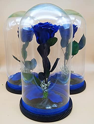 Rosa eterna preservada Azul. Cúpula con Rosa eterna Azul. Altura 25 cm. Rosa Azul eterna preservada. Hecho en España.